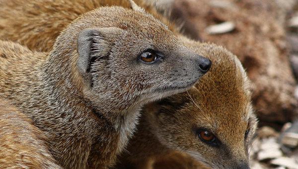 Европа передала Тбилисскому зоопарку животных.