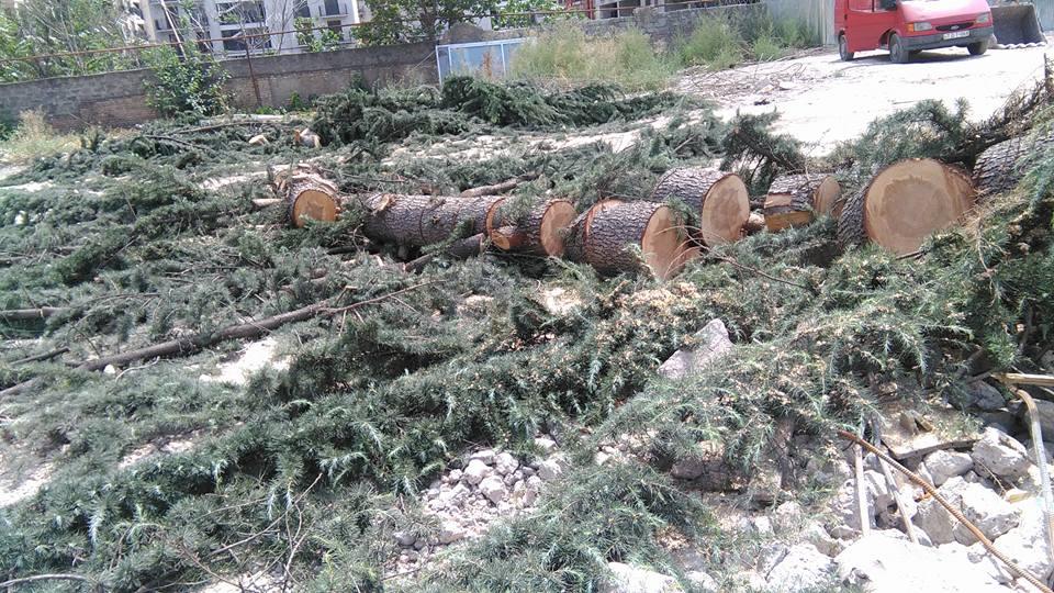 вырубка деревьев в Тбилиси