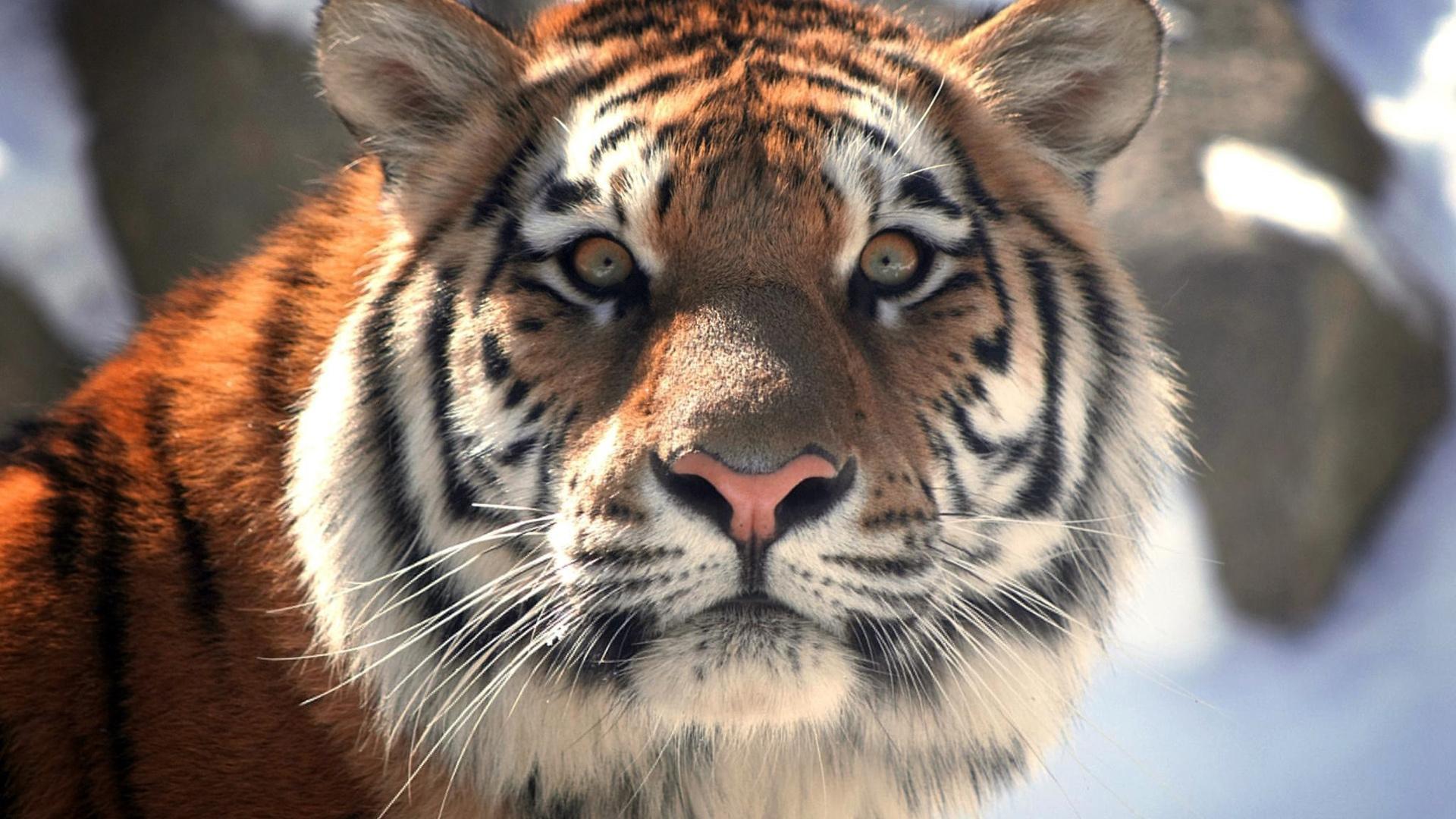 Тбилисский зоопарк принял новых питомцев из Европы Тбилисский зоопарк принял новых питомцев из Европы