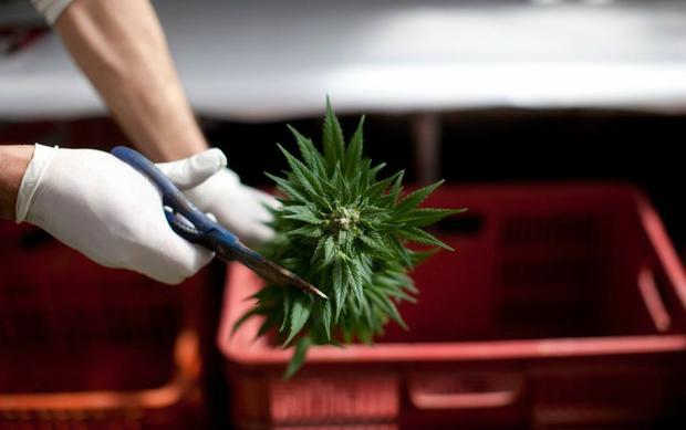 Парламент Грузии одобрил законопроект по смягчению наркополитики