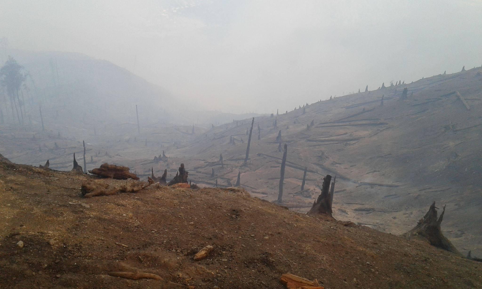 20988242 2163669723661743 32127298096586351 o #фоторепортаж Боржомское ущелье, Грузия, пожар, фото