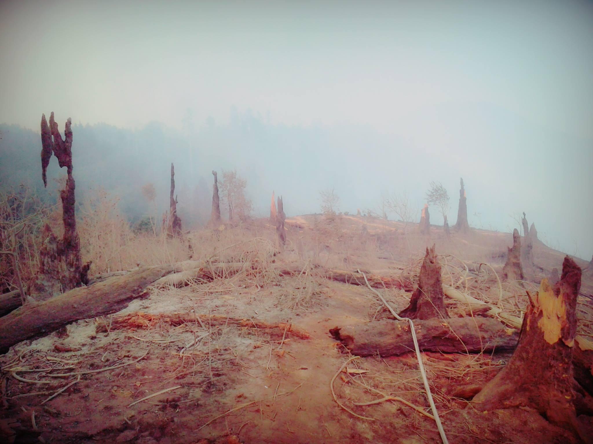 20989219 2163670600328322 8588195092959741293 o #фоторепортаж Боржомское ущелье, Грузия, пожар, фото
