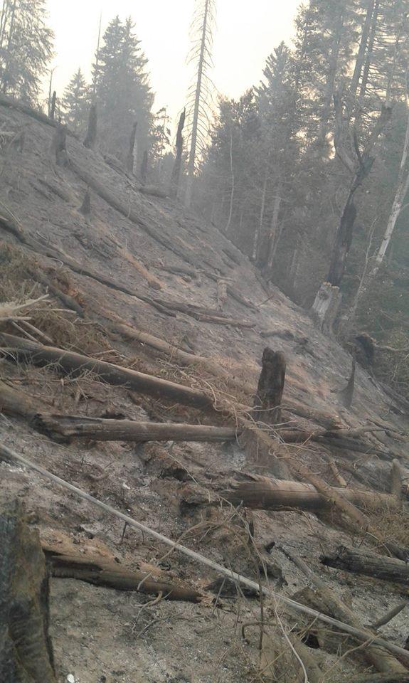 20992573 2163670486995000 7328510752918448077 n #фоторепортаж Боржомское ущелье, Грузия, пожар, фото