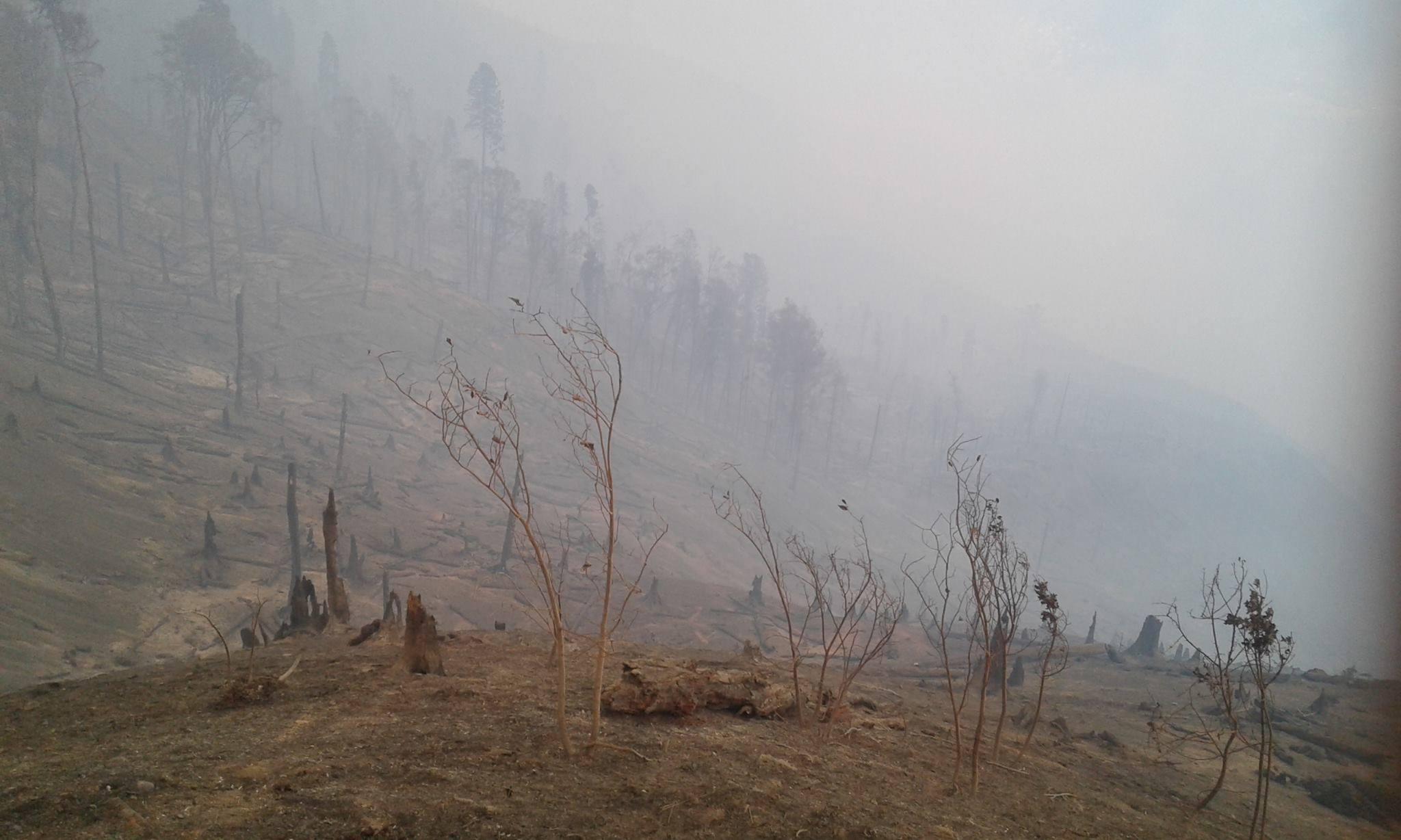 21013998 2163670153661700 4144621376413176771 o #фоторепортаж Боржомское ущелье, Грузия, пожар, фото