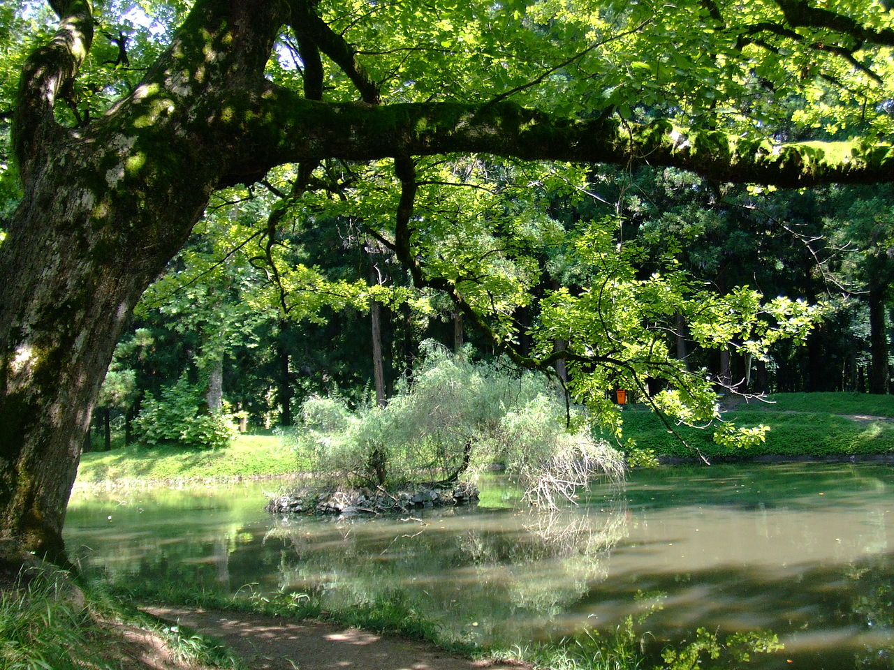 1280px Zugdidi botanical garden5 #новости ботанический сад, Грузия, Дадиани, Дворец Дадиани, Зугдиди, Мегрелия, Самегрело