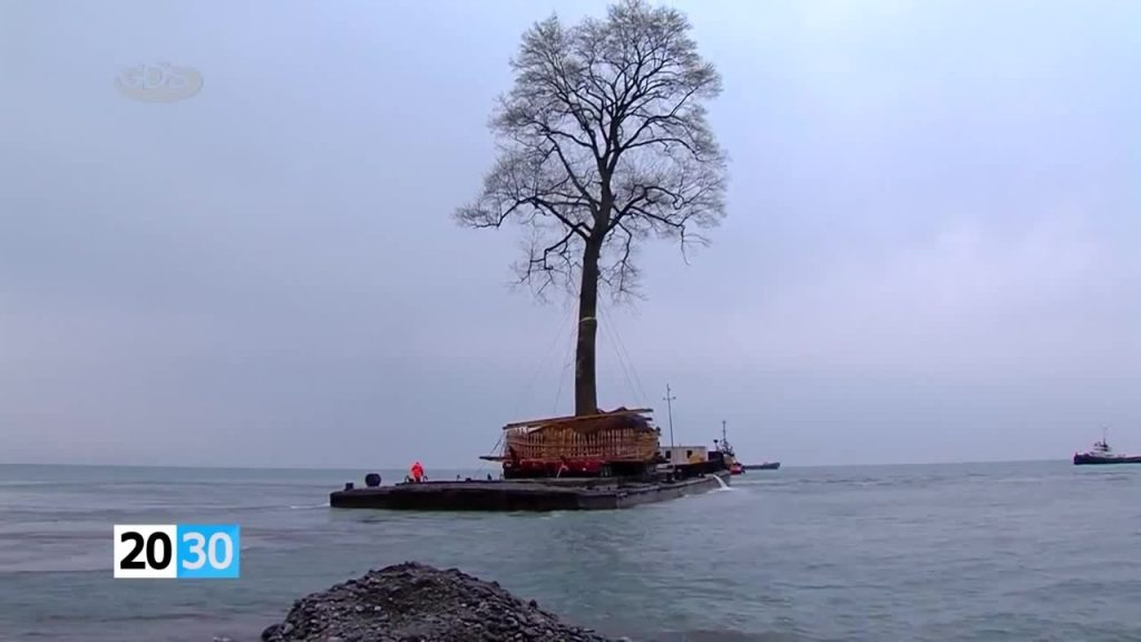 Транспортировка дерева