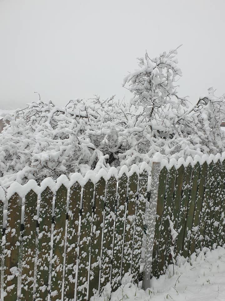 96234926 3474994549194782 1072174706397806592 n #новости Бакуриани, снег