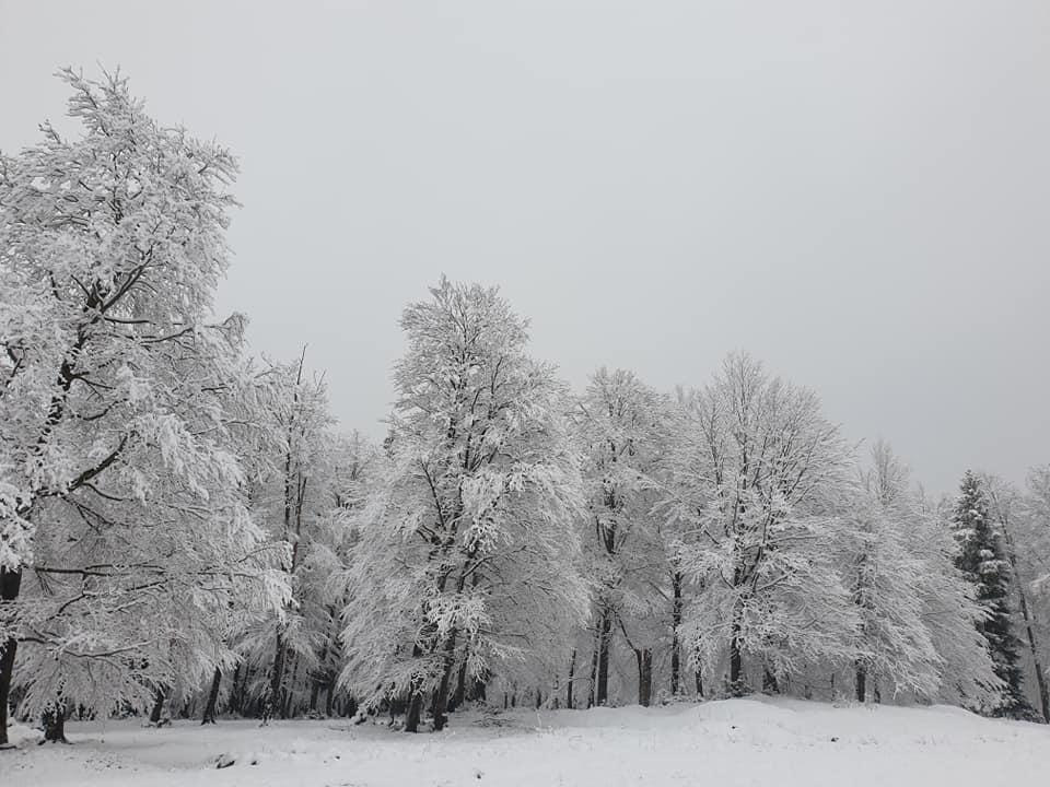 96564508 3474995259194711 199210264044765184 n #новости Бакуриани, снег