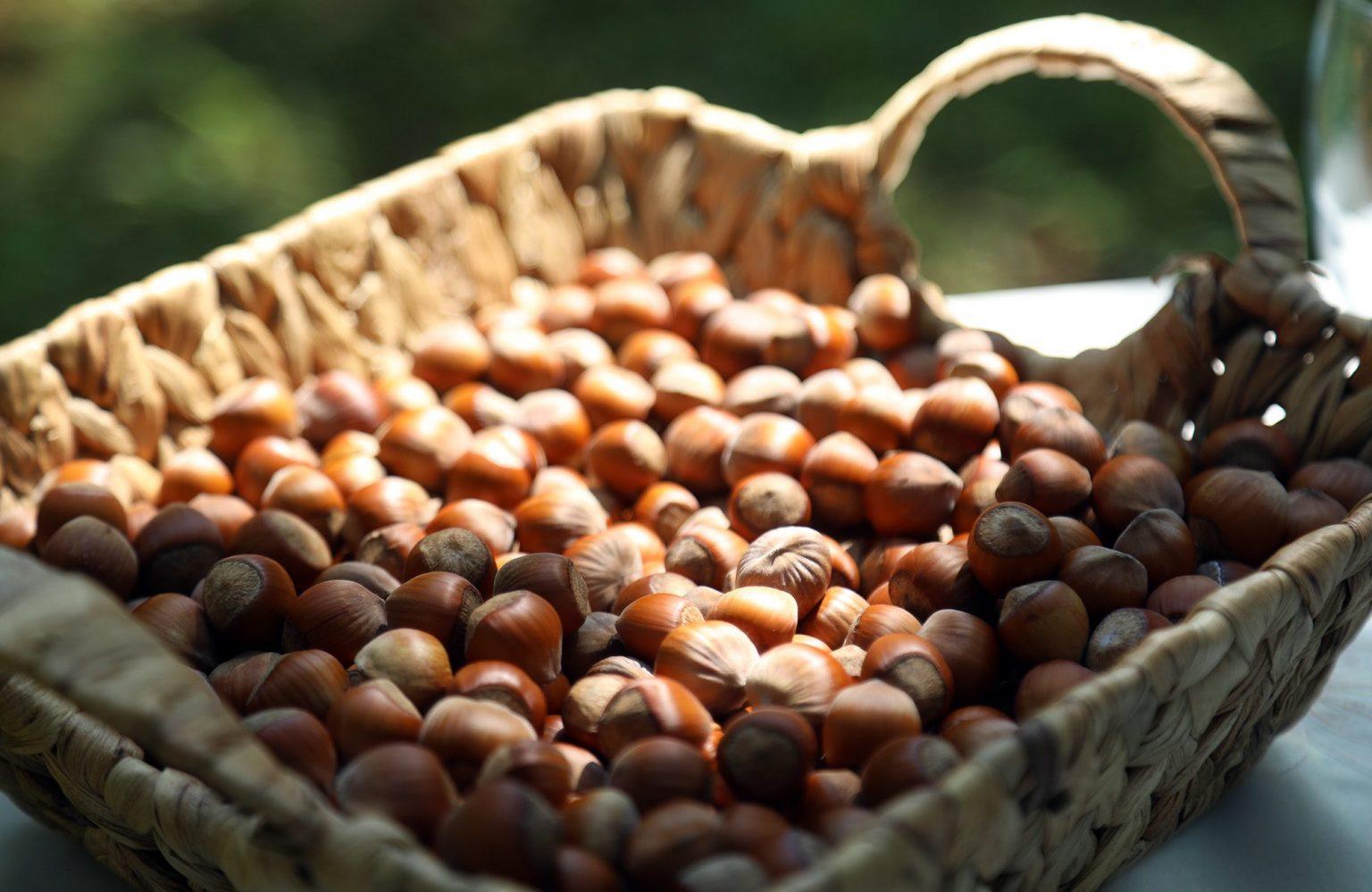 nuts georgia экспорт экспорт