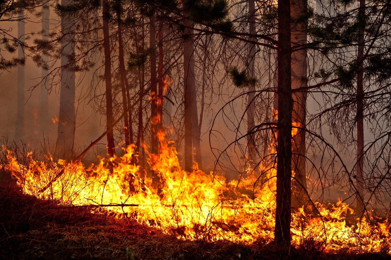 fire wood Самегрело Самегрело