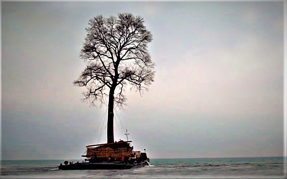 Ivanishvili s tree collecting hobby432342 #политика featured, Бидзина Иванишвили, Георгий Гахария, Георгий Квирикашвили, Грузинская мечта, Ираклий Гарибашвили, Мамука Бахтадзе, премьер-министр