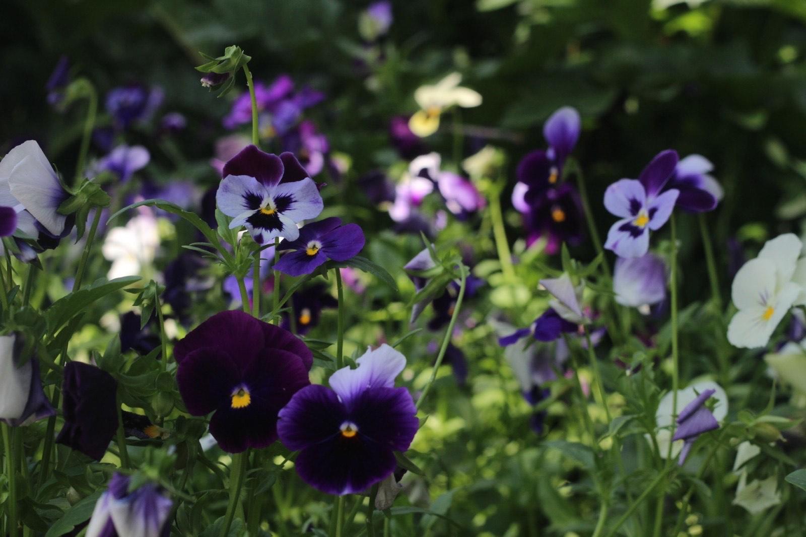 IMG 2482 Другая SOVA Ботаничекий сад, Грузия, тбилиси, Тбилисский ботанический сад, флора, цветы
