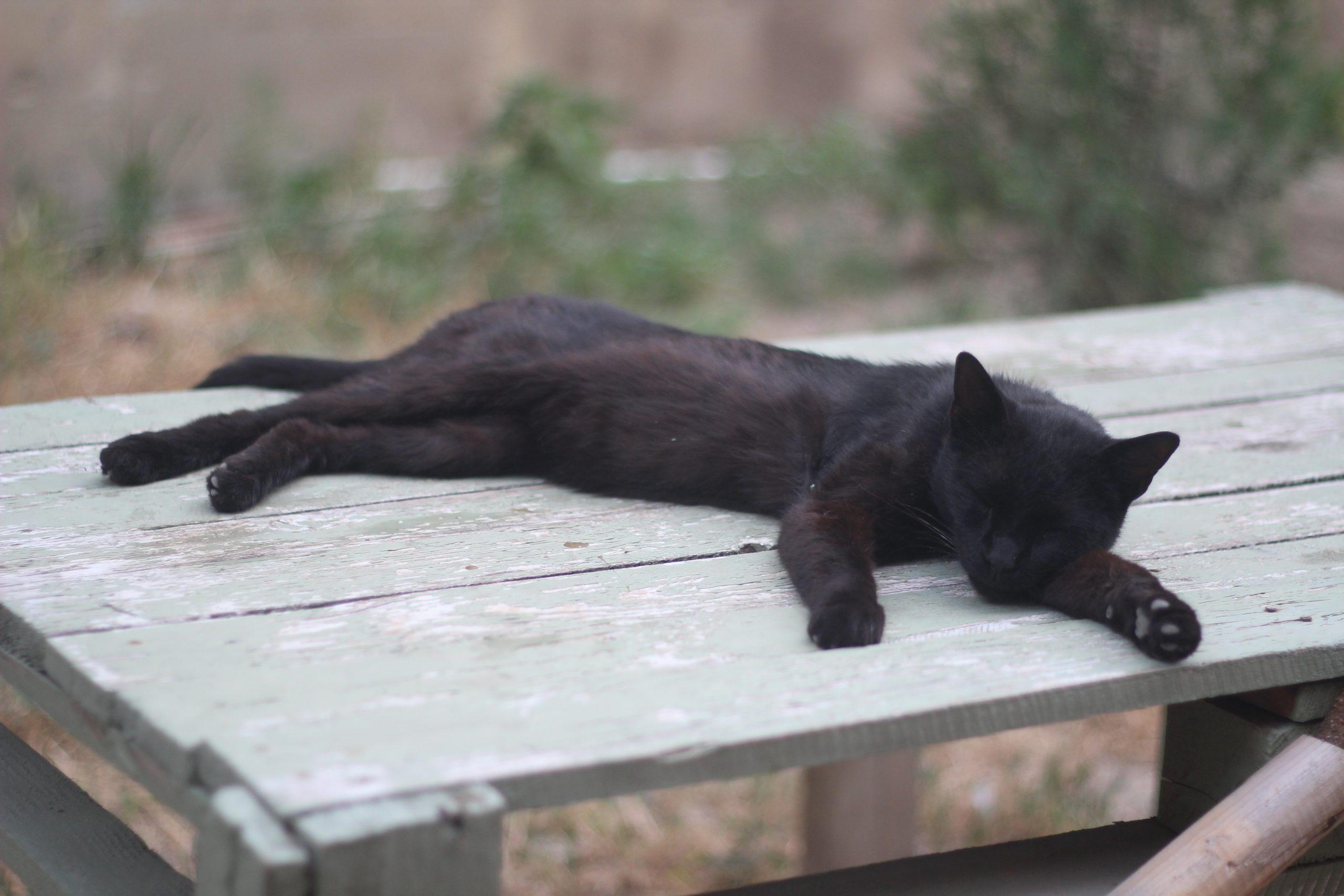 IMG 0650 scaled Другая SOVA бродячие собаки, кошки, кошки Тбилиси, собаки Тбилиси